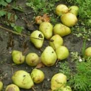 Fruitplukken bij Peter en Ineke